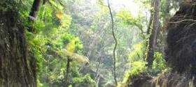 Forest around Ijen crater lake